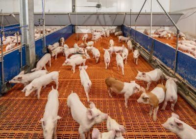 Ashleigh Farm Irland 20180543